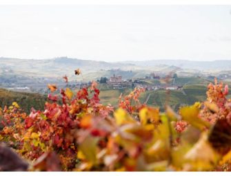 Langhe and Monferrato. Unesco heritage